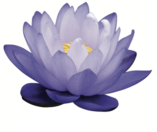 April showers bring May (BLUE LOTUS) flowers. Spread the beauty with the benefits of BLUE LOTUS