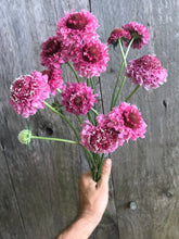 Load image into Gallery viewer, Scabiosa Bouquet