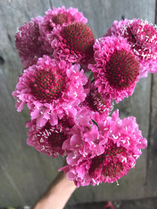 Scabiosa Bouquet