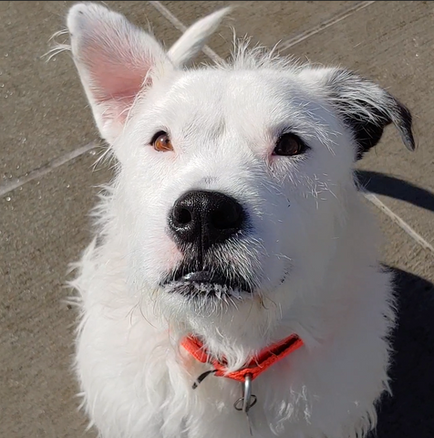 Morty the adoptable terrier mix - Wag On Project pet of the month