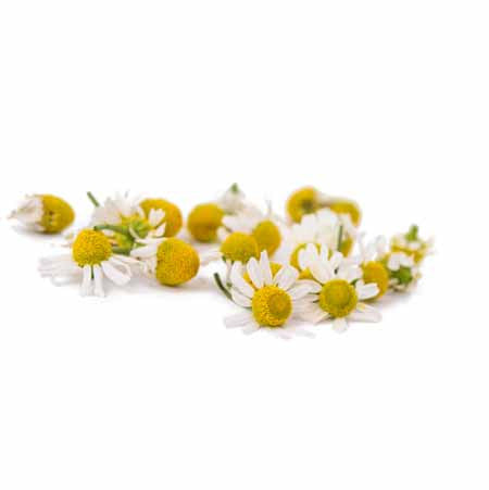 CHAMOMILE GERMAN (BLUE) ORGANIC