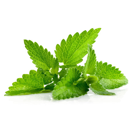 Peppermint Pure Essential Oil Abundant Earth Singapore