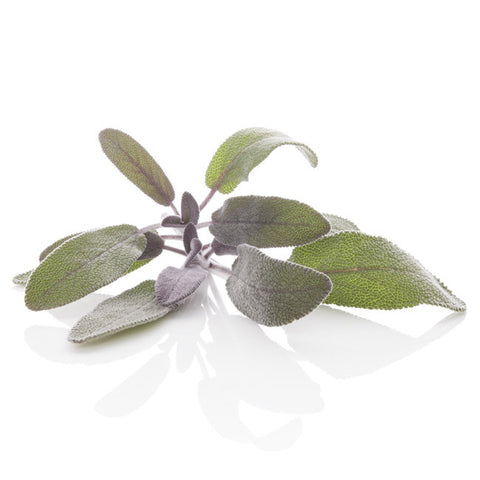 SAGE DALMATIAN ESSENTIAL OIL