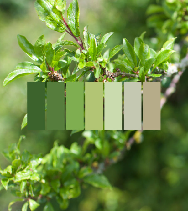 Biophilic Design - Colour