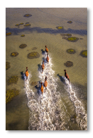 Shackleford Banks - Wild Horses