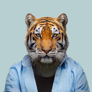 Mishka, the Bengal tiger, from the Zoo Portraits animal art series created by Yago Partal. This anthropomorphic artwork is a mix of photography, illustration and collage.