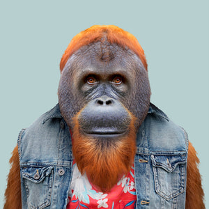 Yusuf, the Bornean orangutan, from the Zoo Portraits animal art series created by Yago Partal. This anthropomorphic artwork is a mix of photography, illustration and collage.