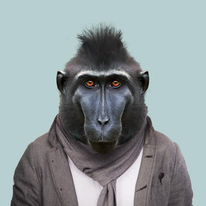 Guss, the celebes crested macaque, from the Zoo Portraits animal art series created by Yago Partal. This anthropomorphic artwork is a mix of photography, illustration and collage.