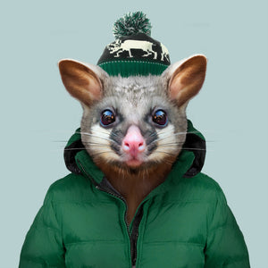 Arlo, the common brushtail possum, from the Zoo Portraits animal art series created by Yago Partal. This anthropomorphic artwork is a mix of photography, illustration and collage.