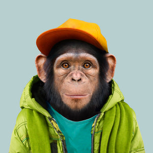 Oumar, the common chimpanzee, from the Zoo Portraits animal art series created by Yago Partal. This anthropomorphic artwork is a mix of photography, illustration and collage.