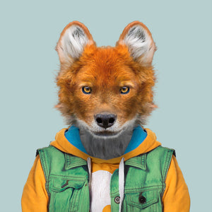 An image of a dhole, wearing a green jacket and yellow sweater, staring straight at the camera. This image is created by Spanish artist Yago Partal, as part of his Zoo Portraits series of animal art.