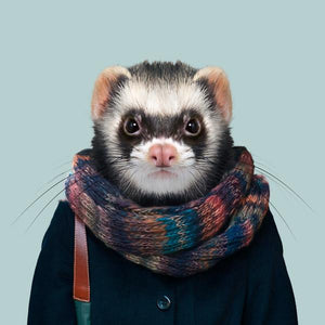 Dee, the ferret, from the Zoo Portraits animal art series created by Yago Partal. This anthropomorphic artwork is a mix of photography, illustration and collage.