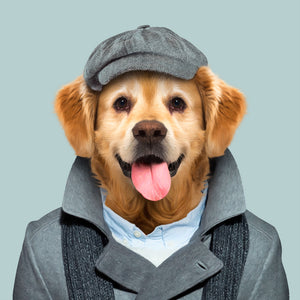 A golden retriever, wearing a grey cap and grey coat, staring straight at the camera. This image is created by Spanish artist Yago Partal, as part of his Zoo Portraits series of animal art.