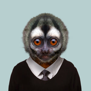 Diego, the Peruvian night-monkey, from the Zoo Portraits animal art series created by Yago Partal. This anthropomorphic artwork is a mix of photography, illustration and collage.