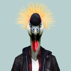 An image of a grey-crowned crane, wearing a white T-shirt and a black jacket, staring straight at the camera. This image is created by Spanish artist Yago Partal, as part of his Zoo Portraits series of animal art.