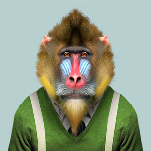 Beni, the mandrill, from the Zoo Portraits animal art series created by Yago Partal. This anthropomorphic artwork is a mix of photography, illustration and collage.