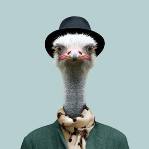 Sammy, the common ostrich, from the Zoo Portraits animal art series created by Yago Partal. This anthropomorphic artwork is a mix of photography, illustration and collage.