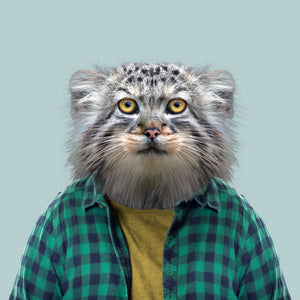 An image of a Pallas' cat, wearing a yellow T-shirt and green and blue checked shirt, staring straight at the camera. This image is created by Spanish artist Yago Partal, as part of his Zoo Portraits series of animal art.