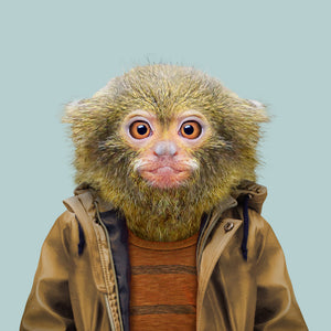 A pygmy marmoset, wearing a beige jacket and orange sweater, staring straight at the camera. This image is created by Spanish artist Yago Partal, as part of his Zoo Portraits series of animal art.