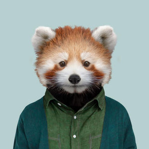 Chang, the red panda, from the Zoo Portraits animal art series created by Yago Partal. This anthropomorphic artwork is a mix of photography, illustration and collage.