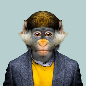 A red-tailed monkey, wearing a blue jacket and yellow sweater, staring straight at the camera. This image is created by Spanish artist Yago Partal, as part of his Zoo Portraits series of animal art.