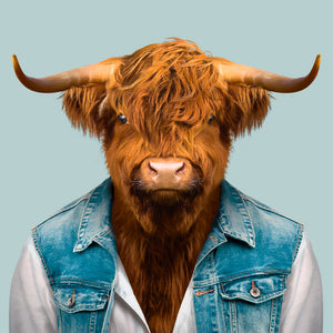 An image of a Highland bull, wearing a shirt and a denim waistcoat, staring straight at the camera. This image is created by Spanish artist Yago Partal, as part of his Zoo Portraits series of animal art.