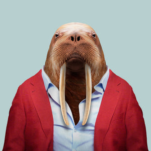 Joseph, the walrus, from the Zoo Portraits animal art series created by Yago Partal. This anthropomorphic artwork is a mix of photography, illustration and collage.