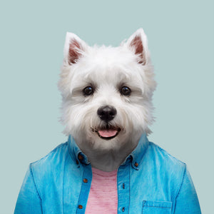 A West Highland white terrier, wearing a blue shirt and pink T-shirt, staring straight at the camera. This image is created by Spanish artist Yago Partal, as part of his Zoo Portraits series of animal art.