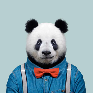Bao, the giant panda, from the Zoo Portraits animal art series created by Yago Partal. This anthropomorphic artwork is a mix of photography, illustration and collage.