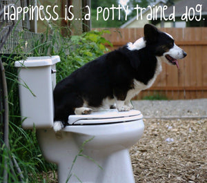 Potty Training Tips for a Welsh Corgi: The Ultimate Guide