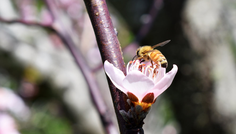 Bee Aware | Pollination Illumination