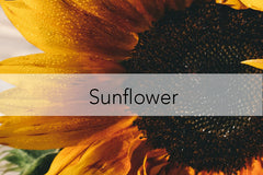 Bee Friendly Plant - Sunflower