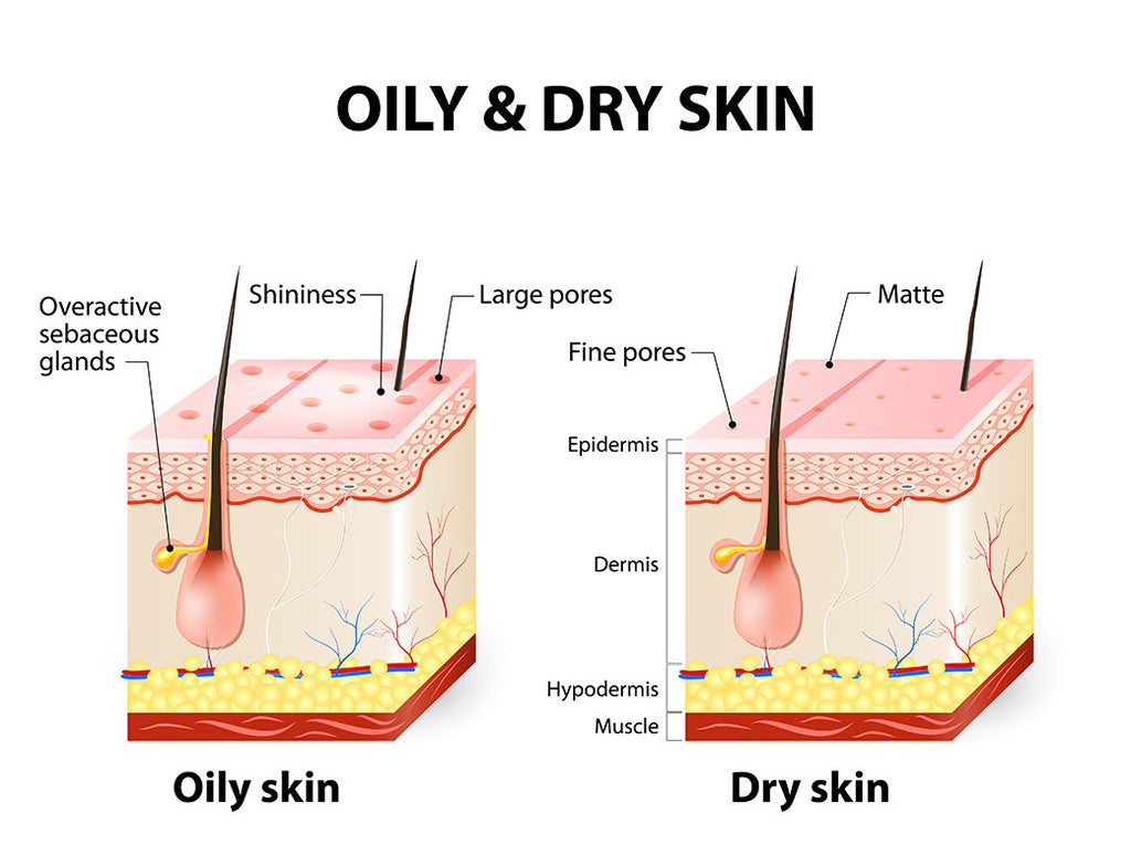 living nature oily skin vs dry skin
