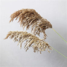 Load image into Gallery viewer, Pampas Stems - Urban Farmhouse Market