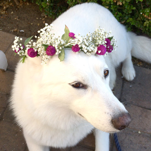 Fresh Flower crowns, flower crowns