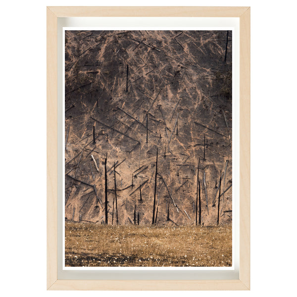 Bushfire Relief Art Print Series - Kenton Valley Hillside, Cudlee Creek Fire 2019 *FINE ART PRINT*