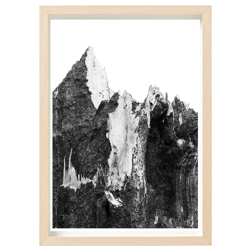 BUSHFIRE RELIEF ART PRINT SERIES - KENTON VALLEY STUMP, SAMPSON FLAT FIRES 2015 *FINE ART PRINT*