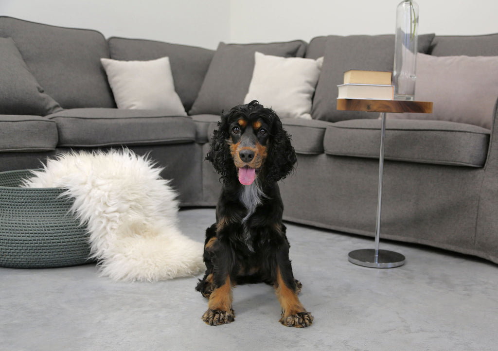 Ikea Sofa Covers against Pets & Fur