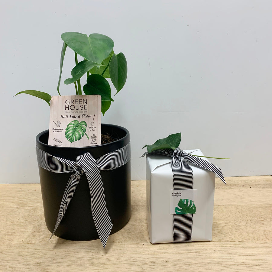 Monstera Plant and Ecosoy natural candle gift set - Sleek and Unique Gifts