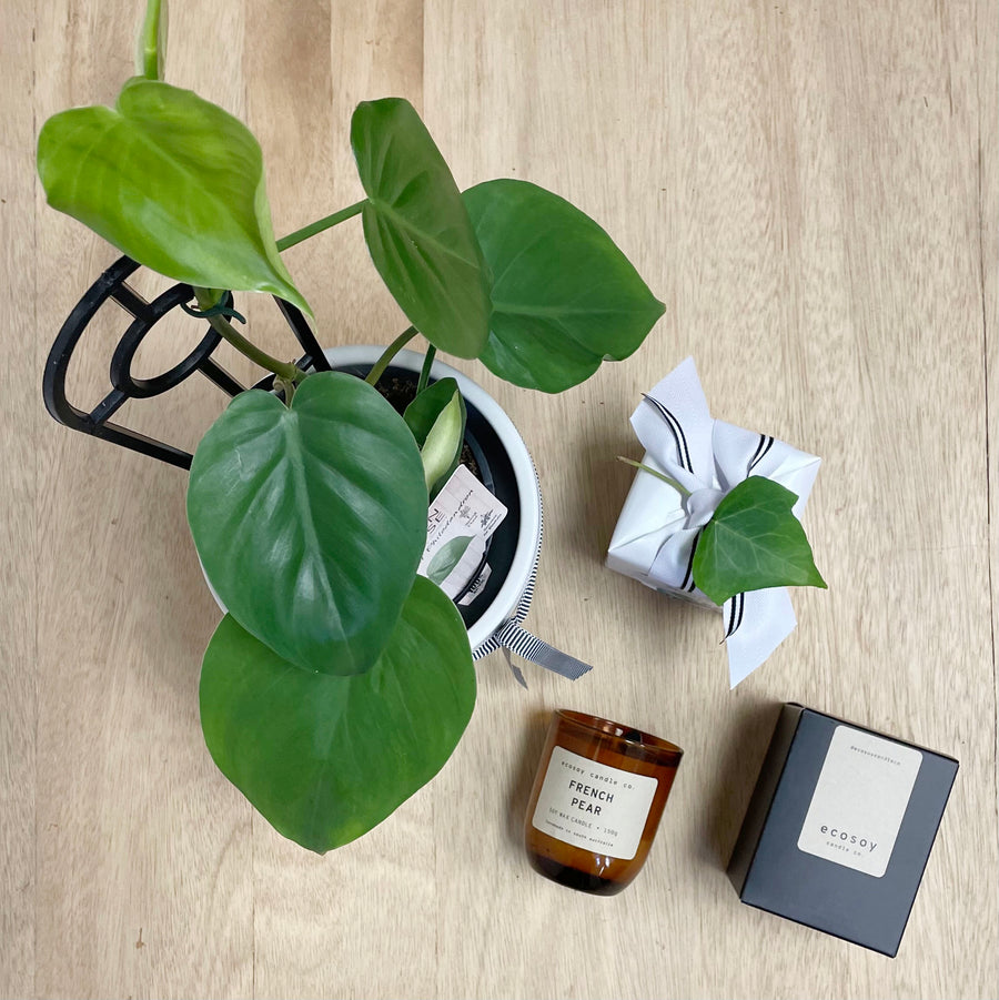 Heart Leaf Philodendron Plant and Ecosoy Candle Gift Bundle - Sleek and Unique Gifts