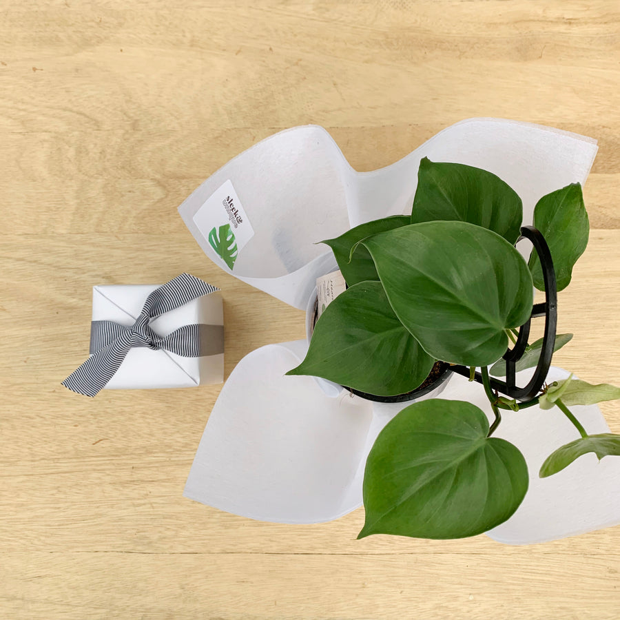 Philodendron Plant & Candle Gift - Sleek and Unique Gifts
