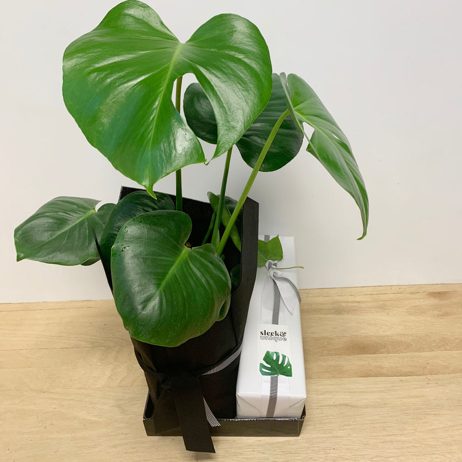Monstera Plant Gift and Hentley Farm Rose - Wine Gifts Delivered Adelaide