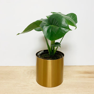 Monstera Gift in Gold Pot - Sleek and Unique Gifts