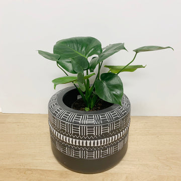 Monstera in Black and White Pot - Sleek and Unique Gifts