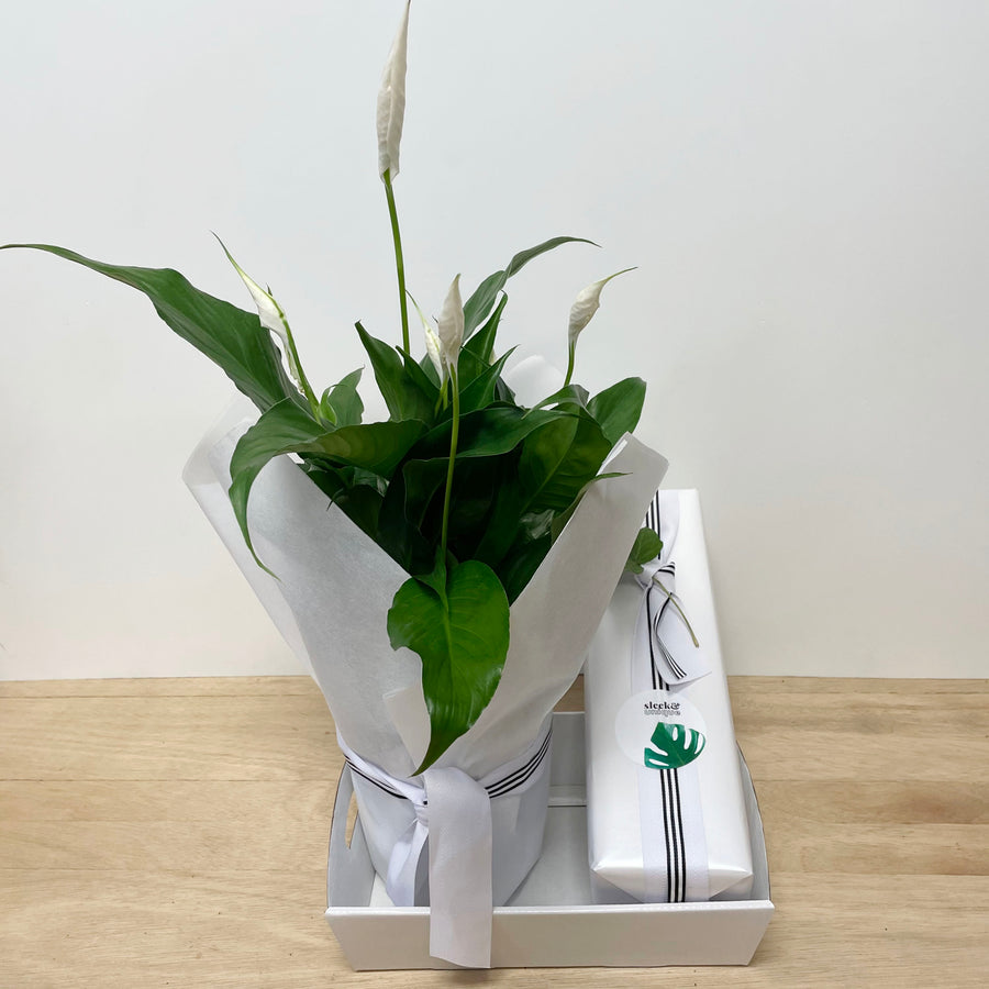 Peace Lily and Champagne Gift Delivery Adelaide