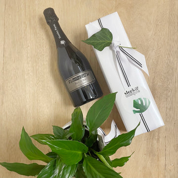 Champagne and Plant Gift Bundle for Adelaide Delivery Perfect for Mothers Day