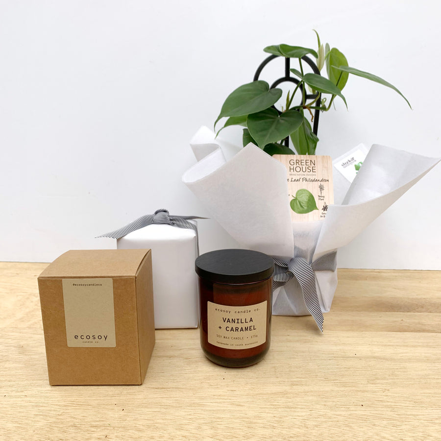 Philodendron & Ecosoy Candle - Adelaide Gift Delivery