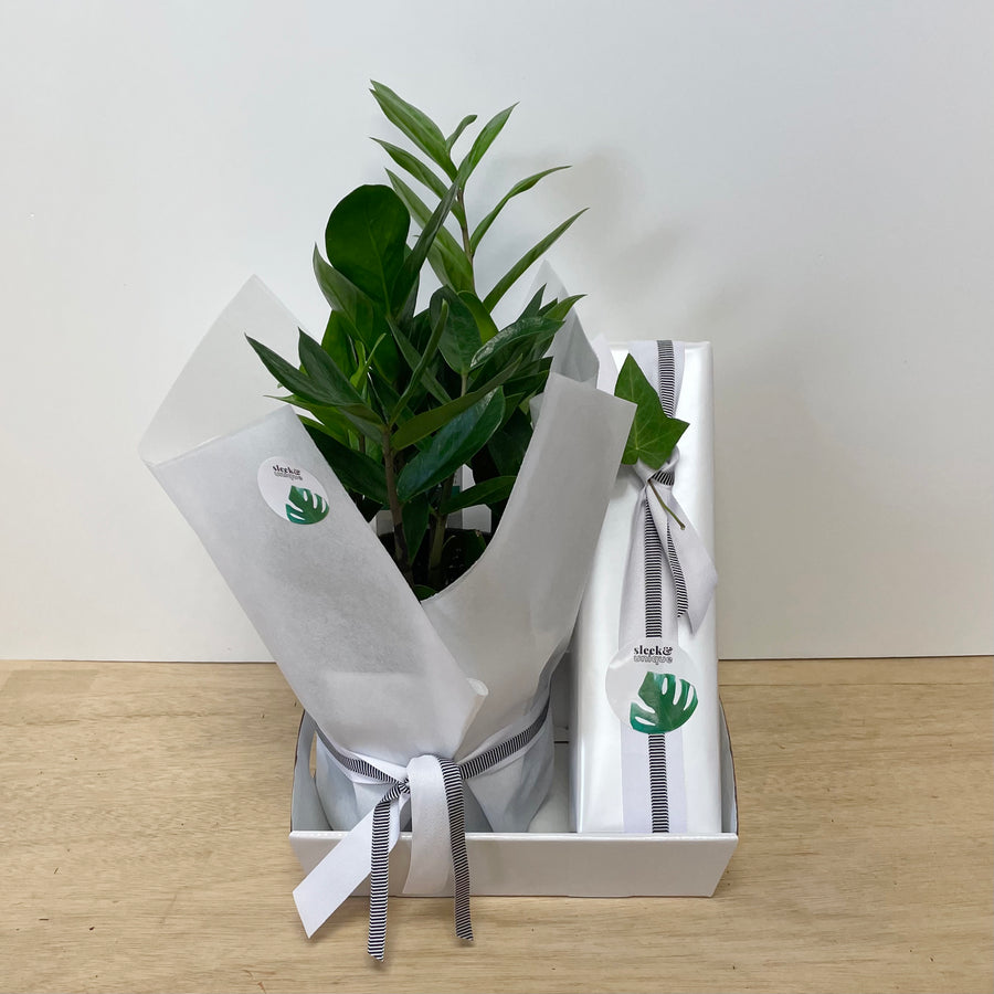 Indoor Plant and Champagne Gift - Adelaide Gift Delivery