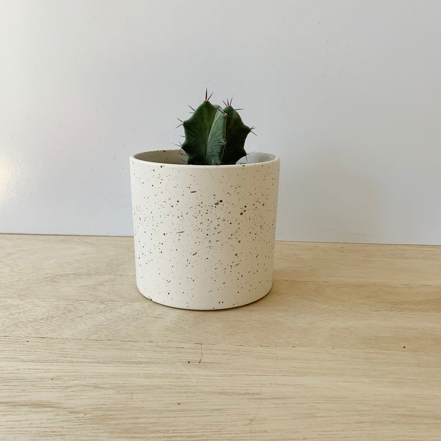 Cactus in ceramic pot - Grey Organ Cactus - Sleek and Unique Gifts