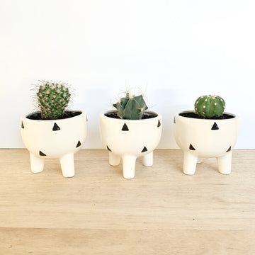Cactus Pots with Triangle Pattern - Adelaide Gift Delivery